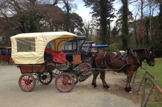 Jaunting Car, Killarney, Ireland