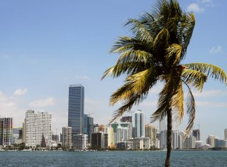 USA, Florida, Miami, Skyline, Coast, Beach Palm tree, NCN